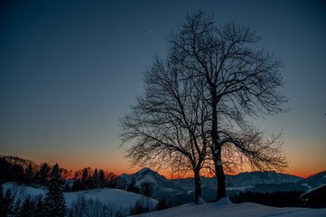 alberi tramonto
