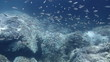 HD underwater footage of a shoal of fish