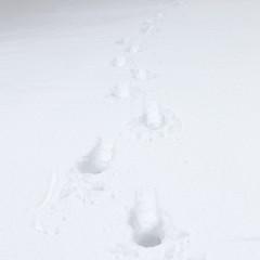 Impronte su neve fresca