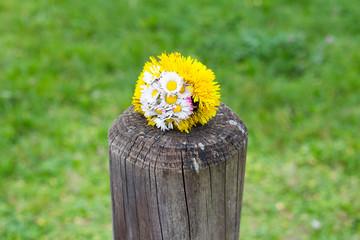 bunch of dandelion flower on a wooden pole symbolizing spring