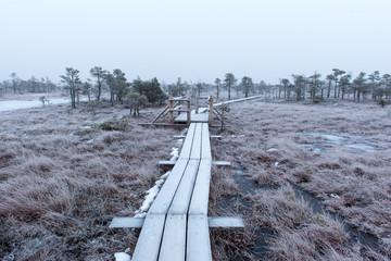 wooden boardwalk in frosty winter bog