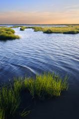 Ocean Inlet with Salt Marsh Grasses