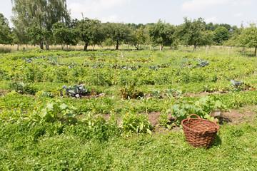 Gemüsegarten mit Korb