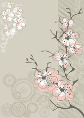 sakura blossom on gray background