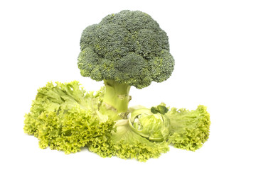 masterpiece of fresh organic vegetables