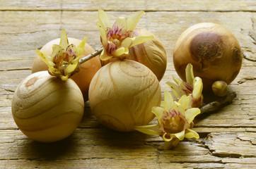 Chimonanthus Calicanto Wintersweet Химонант 蜡梅属
