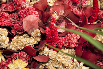 Natural Dried Flowers Background - Red And Beige Colors