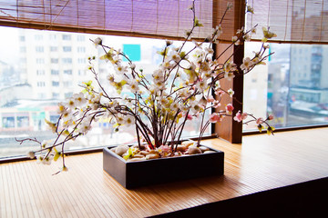 Cherry blossoms (sakura) near window
