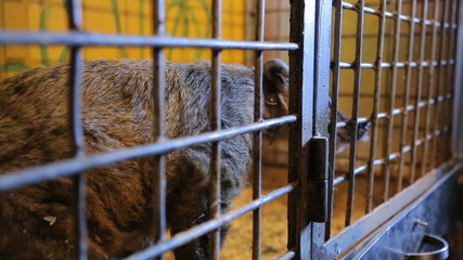 Animal shelter, raccoon, coati in a cage