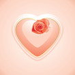 Heart with rose on the pink background