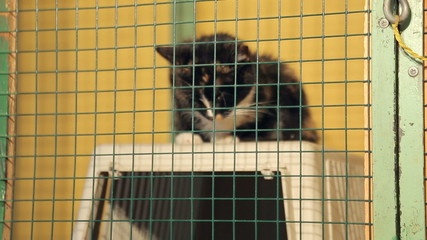 Animal shelter, cat in a cage