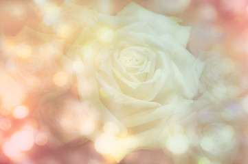 Abstract roses with bokeh background
