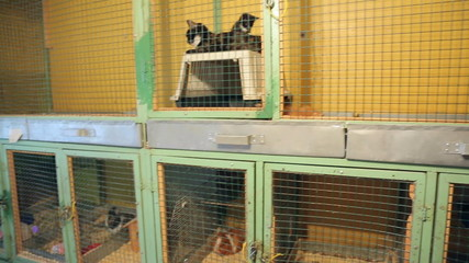 Animal shelter, animals in cages at the animal shelter