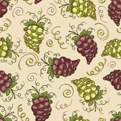 Vector pattern with hand drawn grapes of different sorts