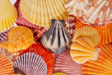 background of collection of various colorful seashells