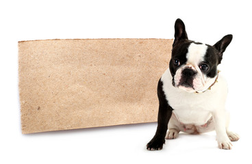 Cute French bulldog with paper sheet isolated on white