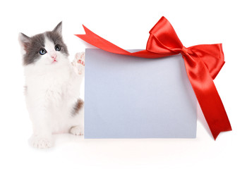 Little kitten with greeting card isolated on white