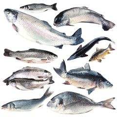 Fresh fish collage, isolated on white