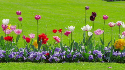 Raw of flowers
