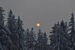 canvas print picture - Sonnenuntergang über Winterwald
