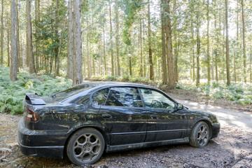 林の中の車のサイドビュー
