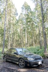 林の中の車のフロントビュー