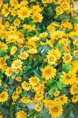plastic flower tree marigold models