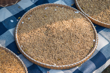 paddy rice in thai bamboo basket