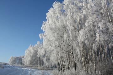 frost on birch