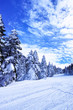 樹氷の中の雪道