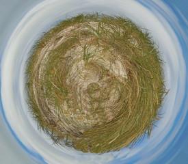 Grassy planet
