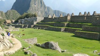 Machu Picchu ruins courtyard lama