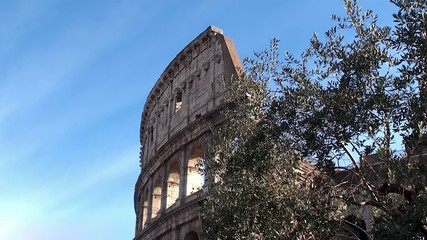 Coliseum In Rome & Olive tree