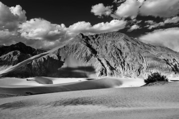 Sand dunes. Nubra valley, Ladakh, India