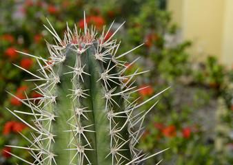 Tropical island cactus close-up