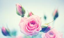 "Постер, картина, фотообои ""Beautiful pink roses. Vintage styled card design"""