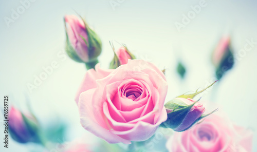 Plexiglas Rozen Beautiful pink roses. Vintage styled card design