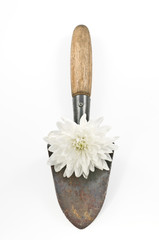 Conceptual  gardening still life with spade and white flower