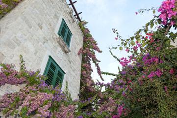 Klettern Blumen in Split
