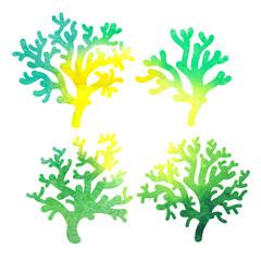 hand drawn decorative watercolor coral