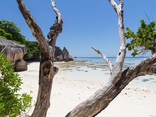 dry tree on a beautiful beach