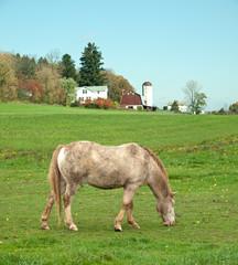 horse grazing in field
