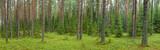 Fototapeta Summer forest panorama