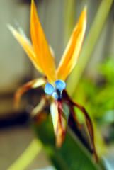 closeup di un fiore