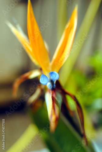 canvas print picture closeup di un fiore