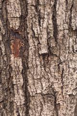 tree bark background texture pattern