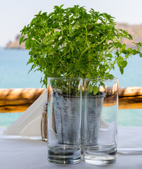 Metal vase with green plants and two empty glasses