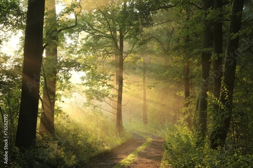 Foto op Canvas Bossen Country road through the forest on a June morning
