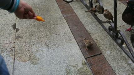 Bird eating fast food near restaurant