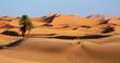 Leinwandbild Motiv Morocco. Sand dunes of Sahara desert
